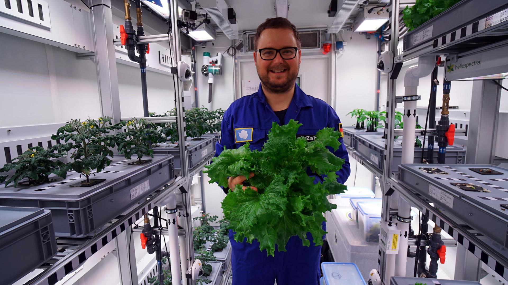 DLR researcher Paul Zabel holds a freshly harvested Antarctic lettuce in his hands
