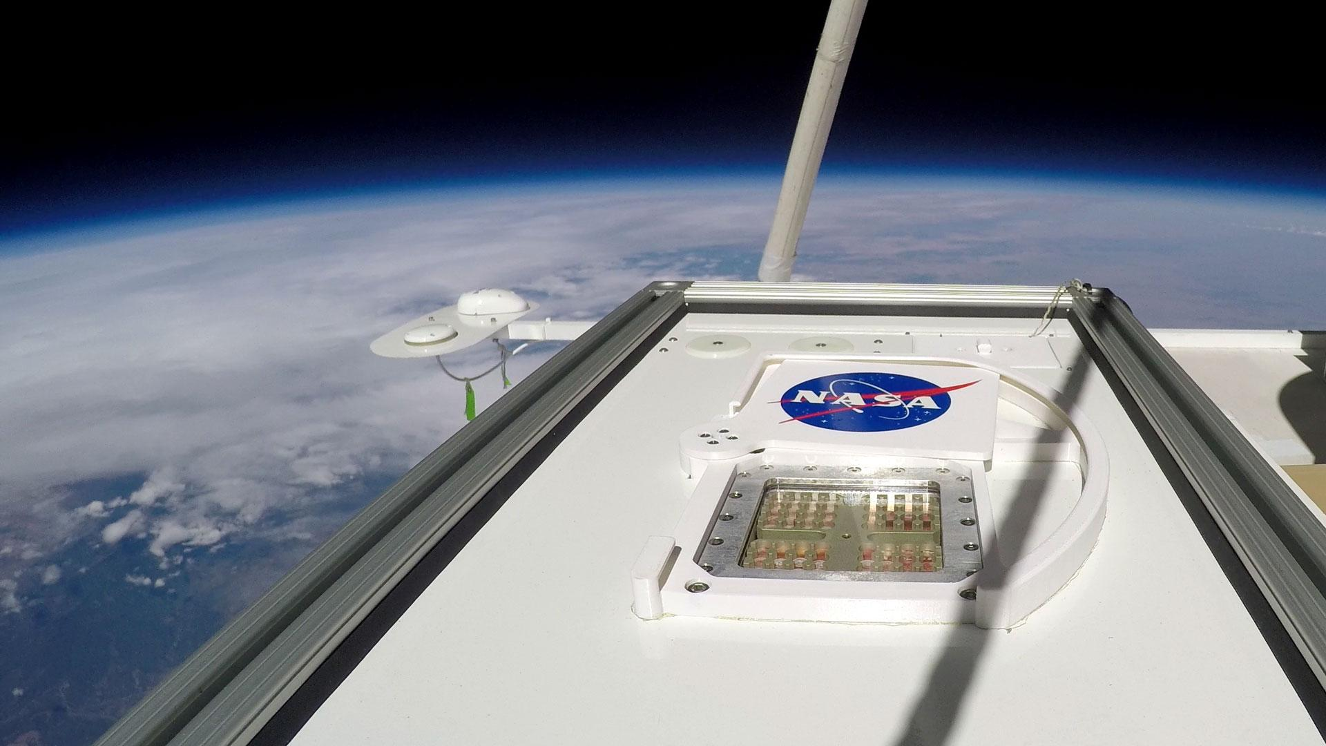 DLR sample carrier containing bacteria and fungi during its nine-hour journey into the stratosphere