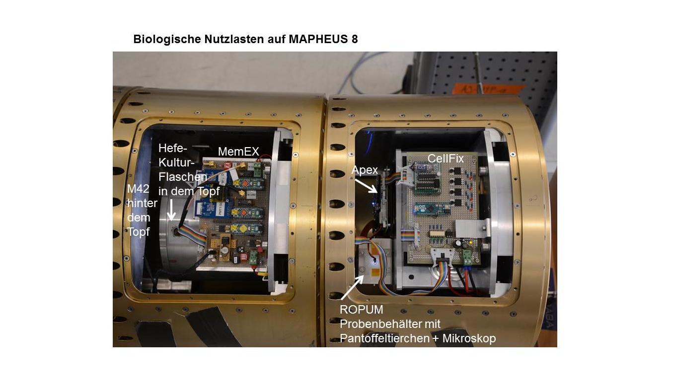 MAPHEUS-8 biology payload