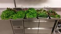 Radieschen und Salatblätter der ersten Ernte