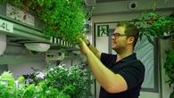 Paul Zabel bei den Erdbeerpflanzen