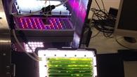 Der Photobioreaktor PBR %2d  Zusammenschluss eines biologischen und eines physikalisch%2dchemischen Systems