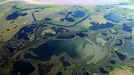 Vegetation des Mackenzie Deltas