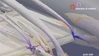 Simulation der Strömungsvorgänge im Langsamflug
