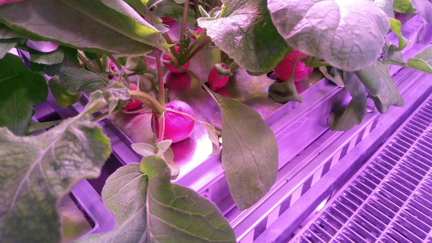 DLR Press Portal - Press releases - First harvest in the Antarctic ...