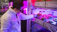 Das EDEN%2dLabor zur Untersuchung con bioregenerativen Lebenserhaltungssystemen.