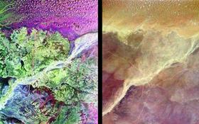 Zwei Bilder, die die Region um die versunkene Wüstenstadt Ubar zeigen. Die dünnen roten Linien auf dem linken Bild sind die alten Handelswege, die schließlich auf die Spur der Siedlung führten. Violett und grün zeigen die Bodenbeschaffenheit an, die graue Farbe markiert ein ausgetrocknetes Flusstal, ein sogenanntes Wadi. Bilder: NASA, JPL, DLR