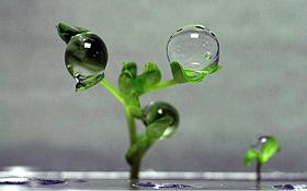 Wie wachsen Pflanzen in Schwerelosigkeit? Bild: NASA