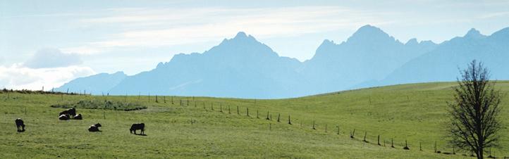In dieser idyllischen Landschaft soll Energie entstehen? Aber klar: Gras, Holz und ... Kuhmist. Bild: Photos.com