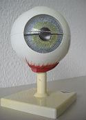 Das Modell des Auges vom DLR_School_Lab-Besuch.  Bild: DLR (CC-BY 3.0).