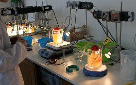 Untersucht die Wasserstoffausbeute der Bakterien unter verschiedenen Umweltbedingungen und findet heraus, welche Verhältnisse die Besten sind. Bild: Technische Sammlungen Dresden
